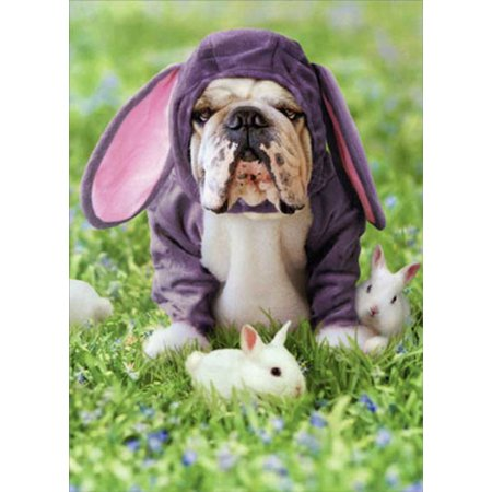 Avanti Press Dog In Bunny Suit Funny / Humorous Bulldog Easter Card (Dogs In Costumes)