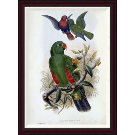 Global Gallery Green Lory By John Gould Framed Painting Print