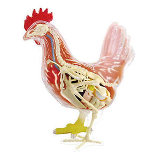 Tedco Toys 26003 4D Chicken Anatomy Model
