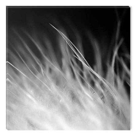 Startonight Canvas Wall Art Black and White Abstract White Feathers, Dual View Surprise Artwork Modern Framed Ready to Hang Wall Art 100% Original Art Painting 31.50 X 31.50 inch