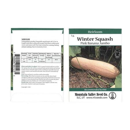 Sunburst Squash Seed - Pink Banana Jumbo Winter Squash Garden Seeds - 5 g Packet - Non-GMO, Heirloom - Vegetable Gardening Seed