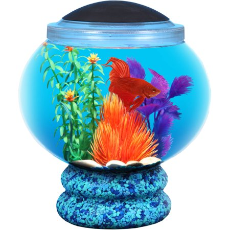 Hawkeye 1 6 gallon betta aquarium fish tank kit with led for How much are betta fish at walmart