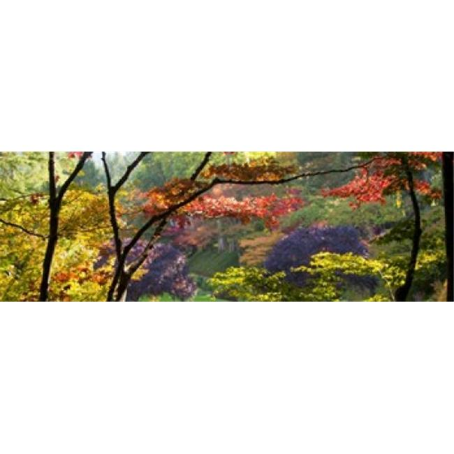 Panoramic Images PPI133255L Trees in a garden  Butchart Gardens  Victoria  Vancouver Island  British Columbia  Canada Poster Print by Panoramic Images - 36 x 12 - image 1 of 1