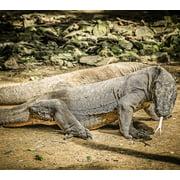 Canvas Print Animal Dangerous Komodo Island Komodo Dragons Asia Stretched Canvas 32 x 24