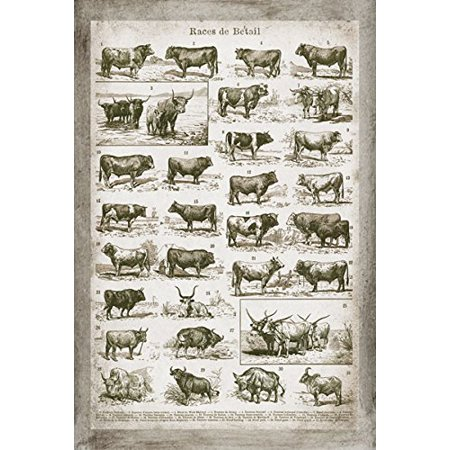 - Lovely Vintage Ephemera French Cow and Bull Chart; French Country Decor; One 12x18in Unframed Paper Poster