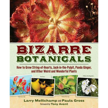 Bizarre Botanicals: How to Grow String-of-Hearts, Jack-in-the-Pulpit, Panda Ginger, and Other Weird and... by