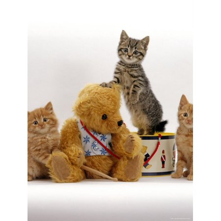 Domestic Cat, Two Ginger Kittens and a Tabby with Ginger Teddy Bear Print Wall Art By Jane (Ginger Tabby Cat)