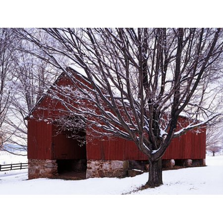 Barn and Maple after winter storm, Fairfax County, Virginia, USA Architecture Snowscape Photography Print Wall Art By Charles Gurche ()