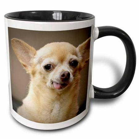 Chihuahua Santa - 3dRose Toothless Chihuahua Dog, Santa Fe, New Mexico - US32 JMR0502 - Julien McRoberts - Two Tone Black Mug, 11-ounce