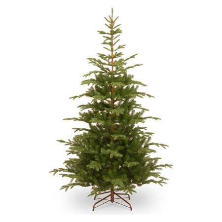 7.5' Norwegian Spruce Tree