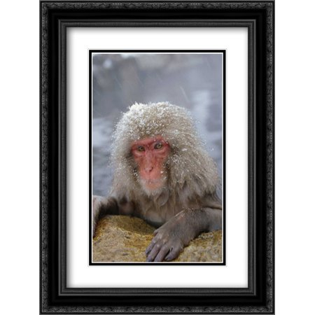 Japanese Macaque soaking in hot springs during a snowstorm, Japan 2x Matted 18x24 Black Ornate Framed Art Print by Wothe, Konrad