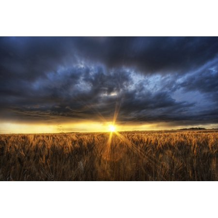 Autumn Sunset Over A Barley Field On A Farm North Of Edmonton Alberta PosterPrint