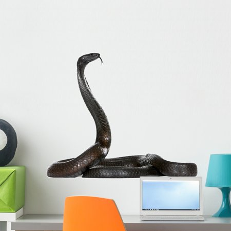 Side Egyptian Cobra against Wall Decal Wallmonkeys Peel and Stick Animal Graphics (24 in W x 20 in H) WM502737 (Cobra Decal)