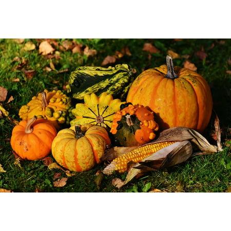 Canvas Print Nature Decorative Squashes Pumpkins Autumn Stretched Canvas 10 x 14 ()