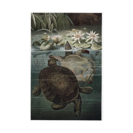 Soft Shelled Turtle by Alfred Edmund Brehm Print Wall Art By Stefano Bianchetti