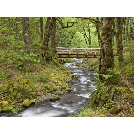 Wooden Bridge Over Gorton Creek Columbia River Gorge Oregon Usa Print Wall Art By Jaynes Gallery