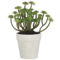 A&B Home Succulent Tree in Pot