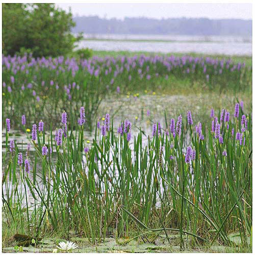 "Trademark Fine Art ""Floral Lake"" Canvas Art by Patty Tuggle"