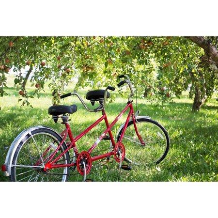 LAMINATED POSTER Bike Apple Orchard Apples Tandem Bike Bicycle Poster Print 24 x (Best Tandem Bikes)