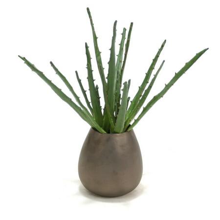 Distinctive Designs Aloe Plant Silk Plant in Sposa Vase