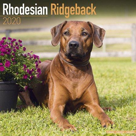 rhodesian ridgeback calendar 2018 - dog breed calendar - premium wall calendar 2017-2018