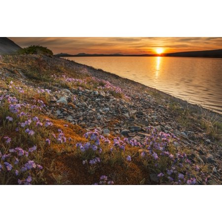 Blue flax and sunset at Lower Twin Lake Lake Clark National Park & Preserve Southcentral Alaska Canvas Art - Carl Johnson  Design Pics (38 x 24) - Twin Lakes Park Halloween