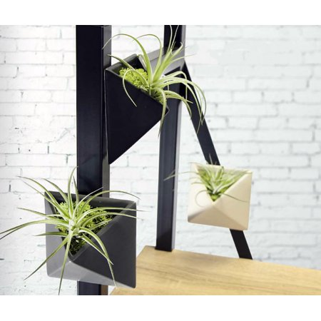 Magnetized Envelope Planter With Live Air Plant   3 5  X 4 5   Black  Live Trends