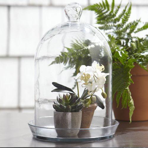 Charlton Home Lulu Glass Bell Jar Terrarium