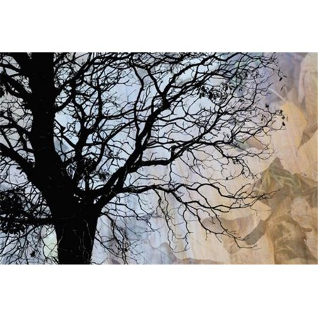 Tree Skeleton Layer Over Opaque Image of Leaves Using Camera Movement - Vancouver British Columbia Canada Poster Print by Judi Angel, 19 x 12