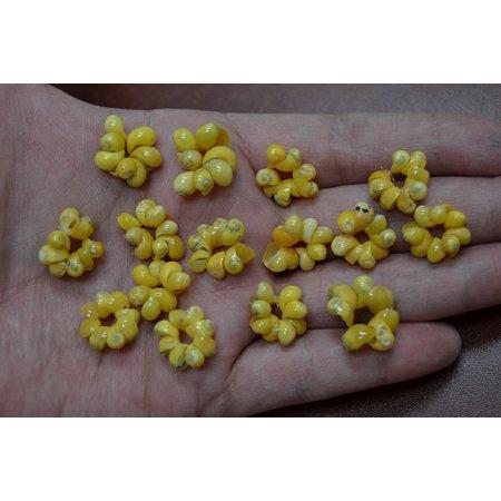 Shell Jewelry Shell (800 Pcs Yellow Mango Shell Beads Shell Circles Rings Crafts Jewelry 1/4