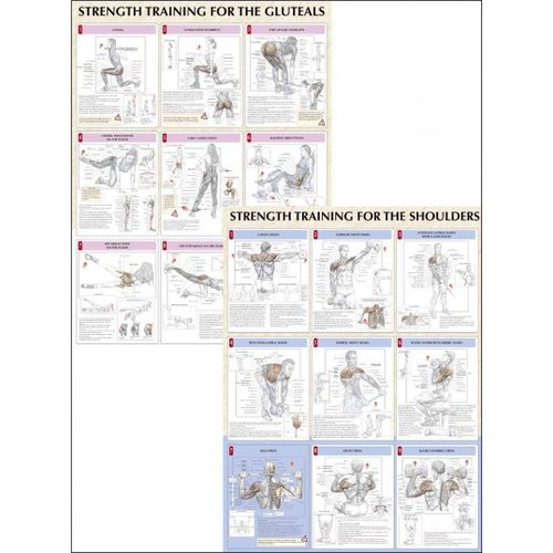 Strength Training Anatomy Charts