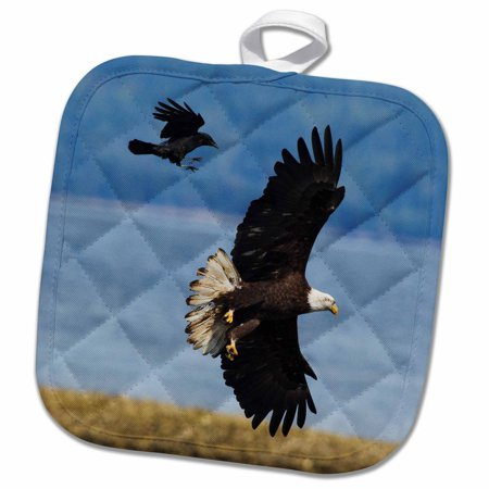 3dRose Crow attacking Bald Eagle - Pot Holder, 8 by 8-inch