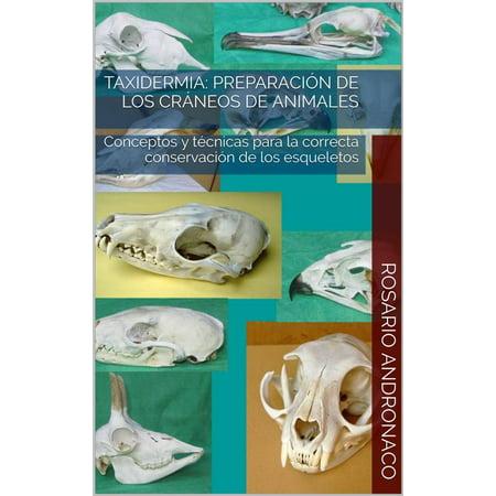 Taxidermia: Preparación de los cráneos de animales - Conceptos y técnicas para la correcta conservación de los esqueletos - eBook - De Halloween Esqueletos