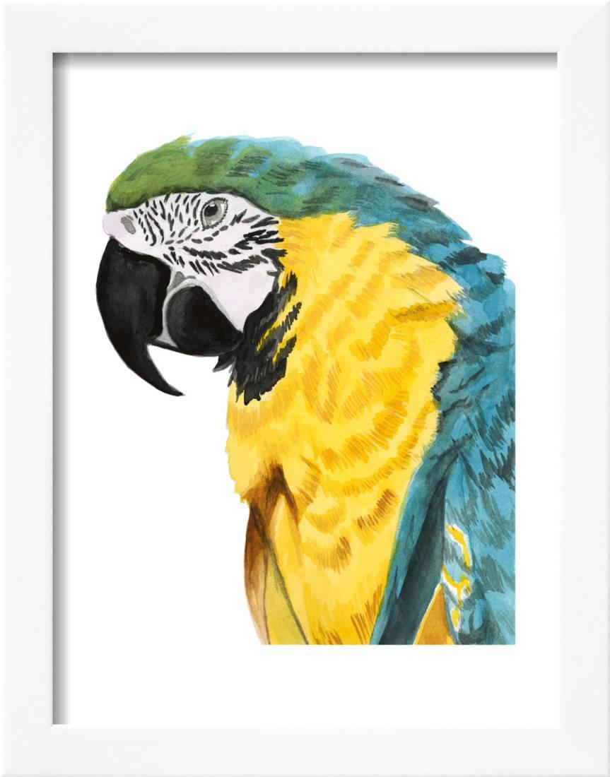 Watercolor Parrot Framed Print Wall Art By Naomi McCavitt - Walmart.com