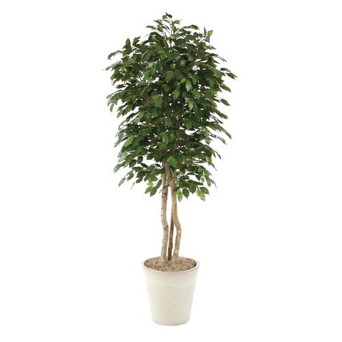 Distinctive Designs Ficus Tree in Planter