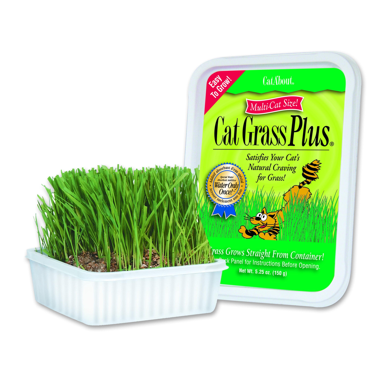 Cat A'Bout Cat Grass Plus, 150 Grams Tub