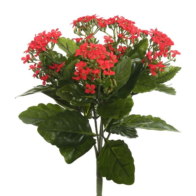 17.25 in. Kalanchoe Bush, Red