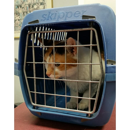 Print Pet Carrier (Canvas Print Domestic Feline Pet Cat Cage Animal Carrier Box Stretched Canvas 10 x 14)