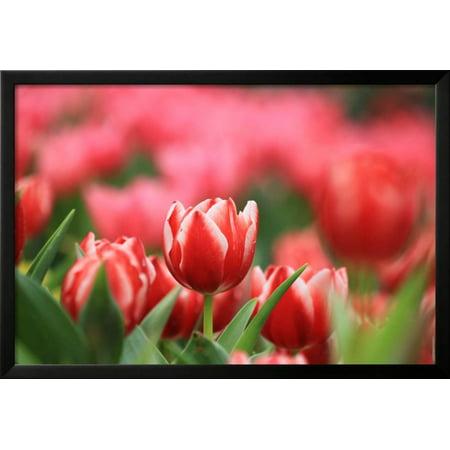 red tulip framed print wall art by khao fofa walmart