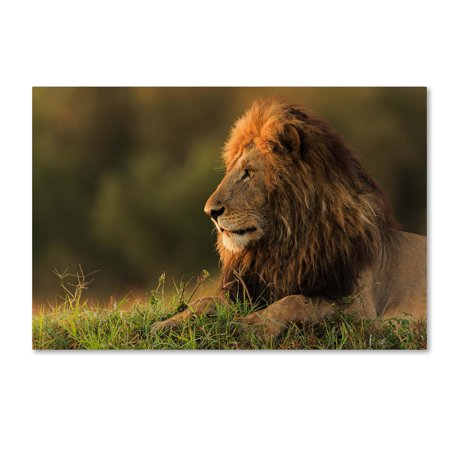 Trademark Fine Art 'Male Lion Watching Sunrise In Masai Mara' Canvas Art by Massimo Mei
