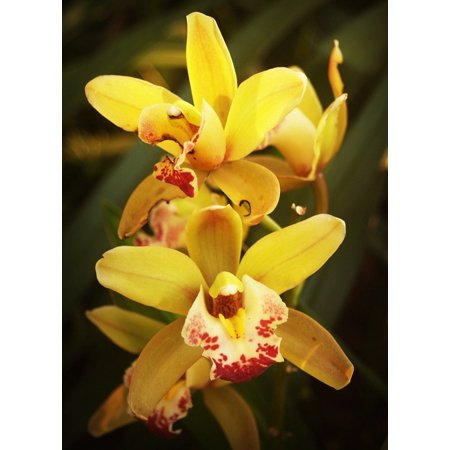 LAMINATED POSTER Green Orchid Flower Tropical White Yellow Red Poster Print 24 x 36