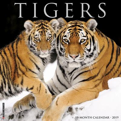 Tigers 2019 Calendar