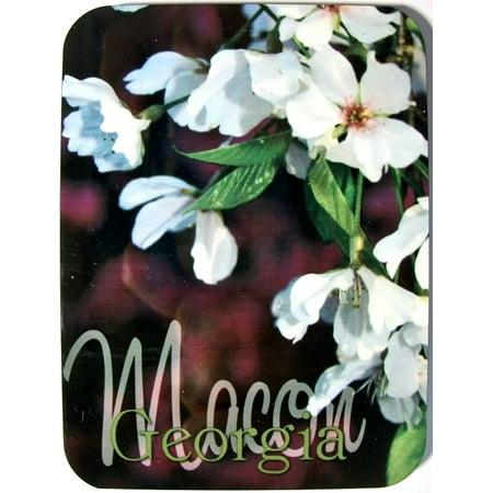 Macon Georgia with Cherry Blossom Flower Photo Fridge Magnet