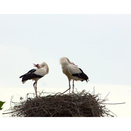 Canvas Print Joy Welcome Stork Couple Ritual Stretched Canvas 10 x (Joy Stork)