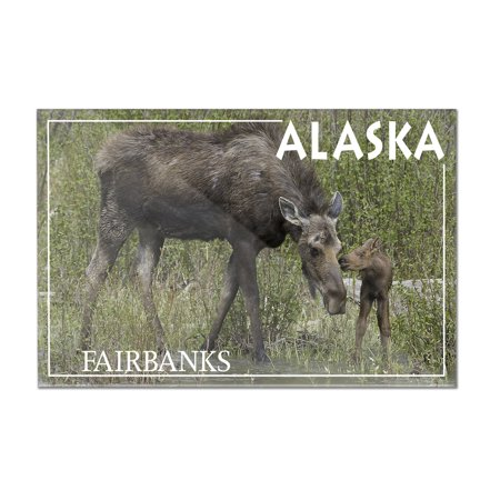 Mother Moose and Baby - Fairbanks, Alaska - Lantern Press Photography (James T. Jones) (12x8 Acrylic Wall Art Gallery Quality)