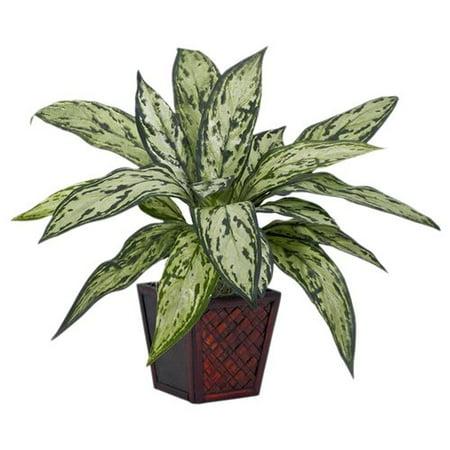 Silver Queen Silk Plant  Green  2Pc