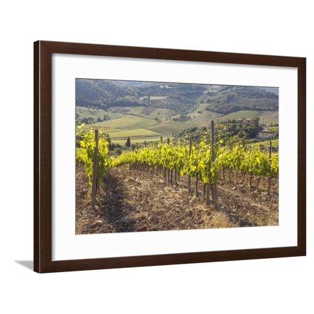 Vineyards Near to Montalcino, Val D