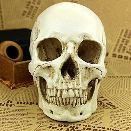 Good Day Columbus Halloween (1:1 Realistic Life Size Human Anatomy White Resin Replica Skull Halloween)