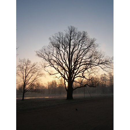 LAMINATED POSTER Morning Trees Black Evening Branches Dark Poster Print 24 x 36](Black Tree Branches Halloween)