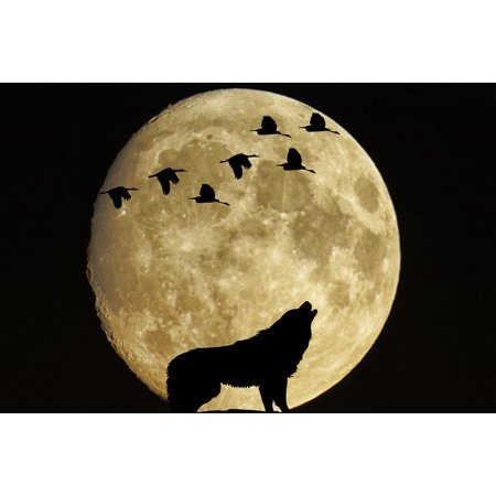Moonlit Bird (LAMINATED POSTER Wolf Moonlight Full Moon Moon Mystical Birds Poster Print 24 x 36 )